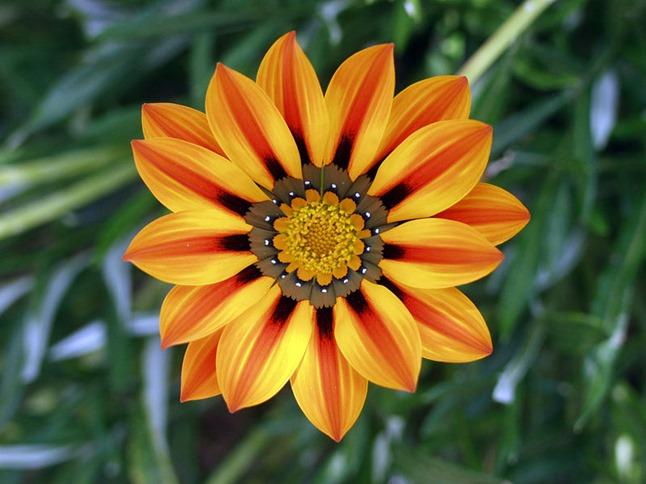 800px-Flower_jtca001