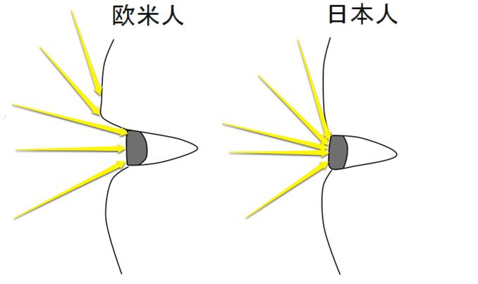 欧米人と日本人の目に光が入る量のイメージ
