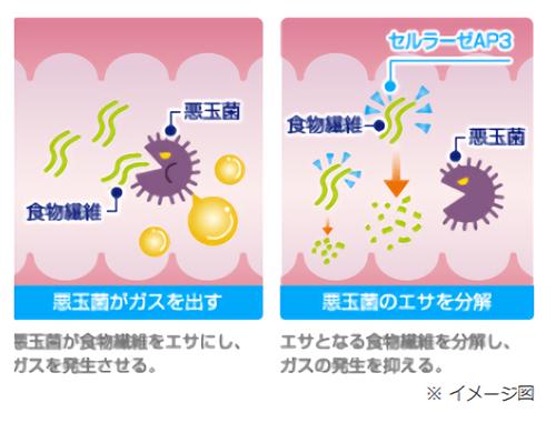 セルラーゼAP3が消化酵素となってガスの発生を抑える