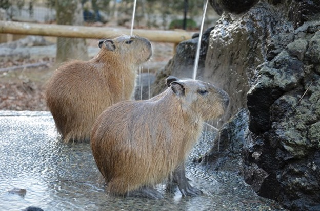 温泉の打たせ湯