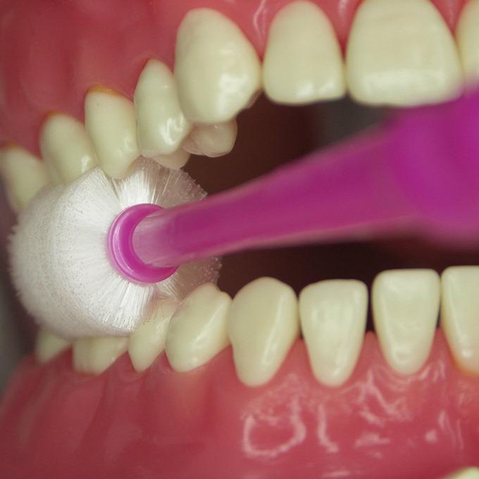 奥歯も上下同時に磨ける