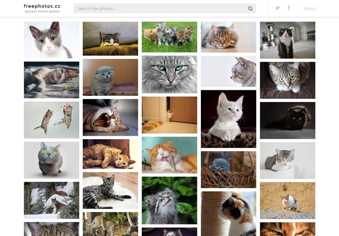Cat Free Photos, Stock Images - FreePhotos.cc