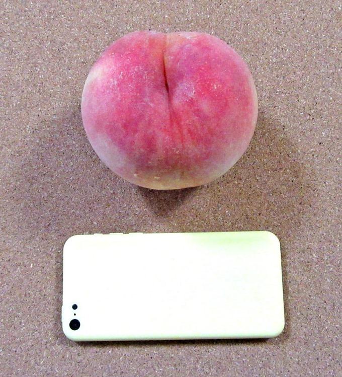 桃のサイズをスマホと比較